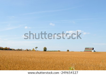 Field of corn being harvested on an autumn day - stock photo