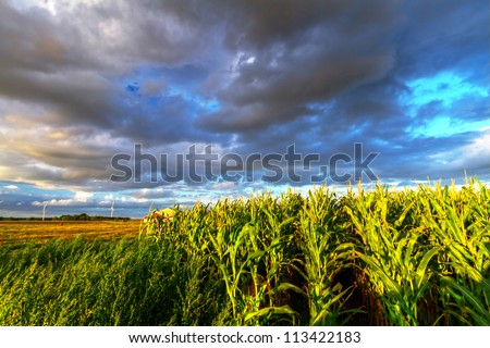 Field of corn with stormy clouds in Sweden - stock photo