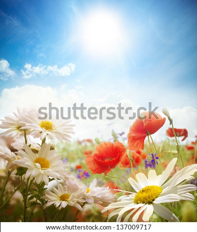 Field of daisies, sky and sun. - stock photo
