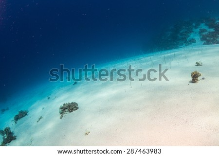 Field of eels at the bottom of the Red Sea - stock photo