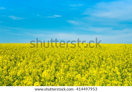 Field of flowering rape against the blue sky and clouds. Alternative energy. Biofuels  - stock photo