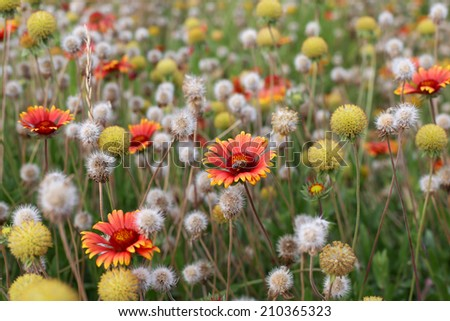 Field of flowers. Shallow DOF - stock photo