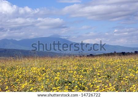 Field of Flowers - Tanzania - stock photo
