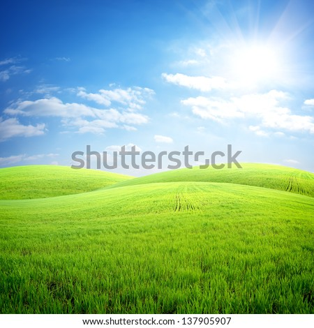 Field of fresh grass on a background of blue sky - stock photo