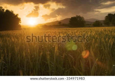 Field of fresh green barley on a clear spring day. - stock photo