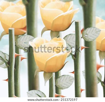 field of fresh yellow garden roses. - stock photo