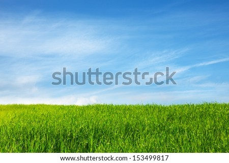 field of grass and blue sky  - stock photo