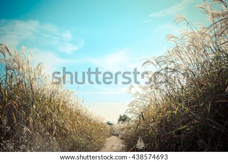 field of grass and perfect blue sky in vintage color - stock photo