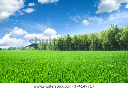 field of grass and perfect sky - stock photo