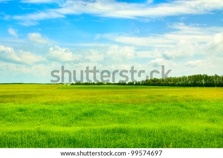 field of grass and perfect sky, Belarus - stock photo