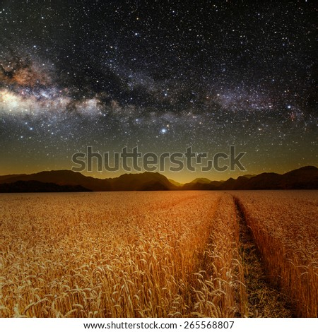 field of grass. meadow wheat under stars sky. Elements of this image furnished by NASA - stock photo