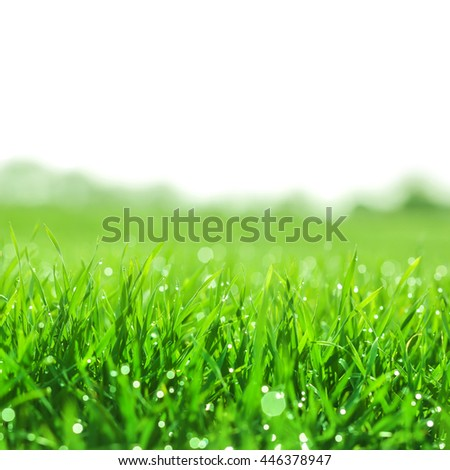 Field of grass with dew at dawn. Here could be your text - stock photo