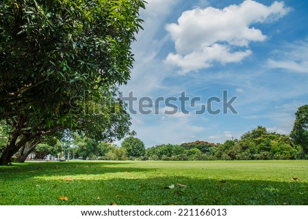 Field of grass with sky in the background. - stock photo