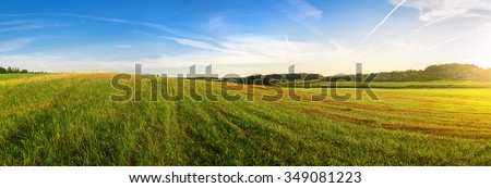 Field of green grass and blue sky. Panoramic shot. Sunny day in the countryside. Summer landscape. - stock photo