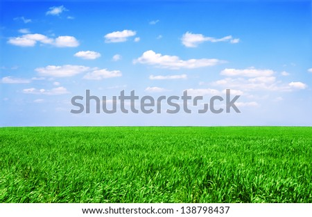 Field of green grass and perfect sky - stock photo