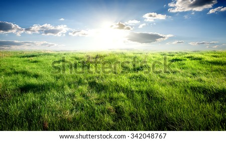 Field of green grass and sunny sky - stock photo