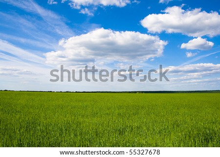 Field of green grass on a background - stock photo