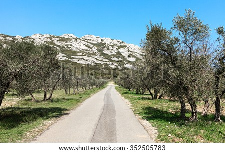 field of olive trees - stock photo