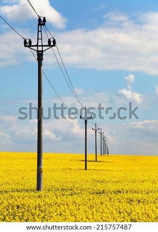 field of rapeseed (brasica napus) and medium voltage pole  - stock photo