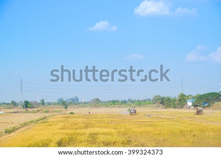 field of rice harvest with blue sky for background texture. - stock photo