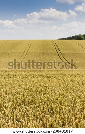 Field of ripe wheat on a mid summer day - stock photo