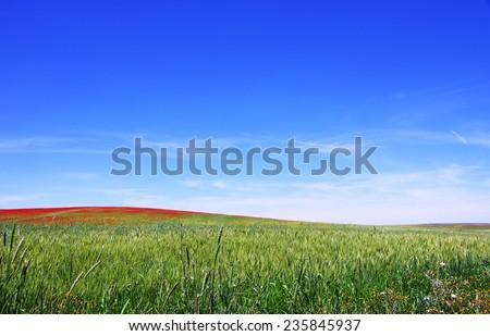 Field of Spring, alentejo  region, Portugal.  - stock photo