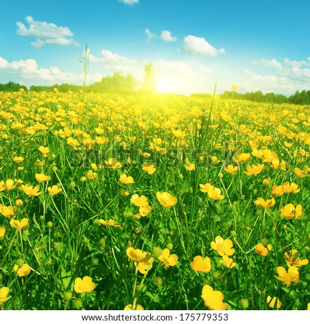 Field of spring flowers, blue sky with clouds and sun. - stock photo