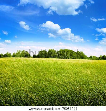Field of summer grass and bright blue sky. - stock photo