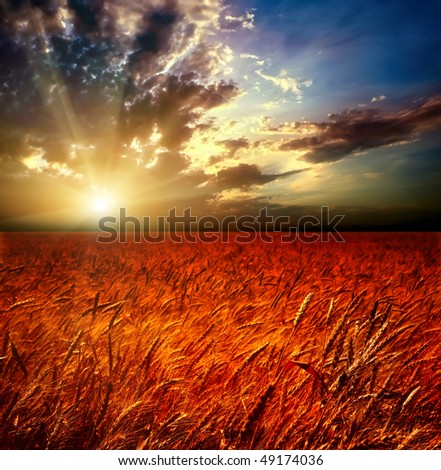 Field of wheat and sunset - stock photo