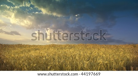 field of wheat on fondalul cloudy sky, panoramic image - stock photo