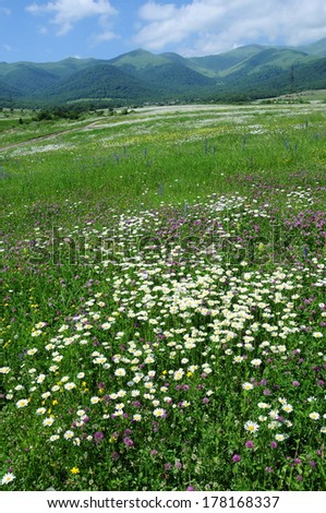 Field of wildflowers    - stock photo