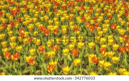 Field of yellow and red tulips,photo art - stock photo