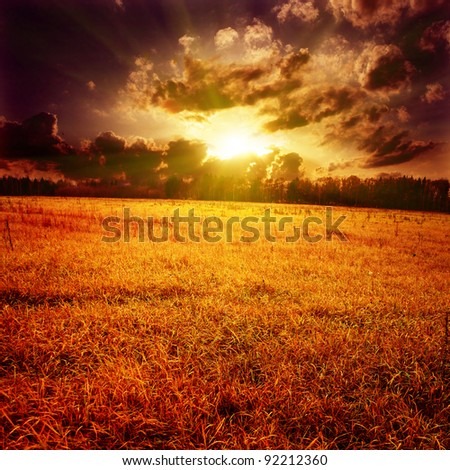 Field of yellow grass under dramatic stormy sky. - stock photo