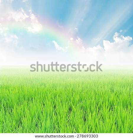 field on a background of the blue sky with rainbow - stock photo