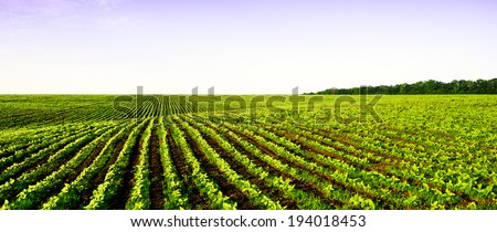 field panorama farming - stock photo