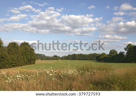 Field shoulder with wild flowers in the Osnabrueck country, Lower Saxony, Germany - stock photo
