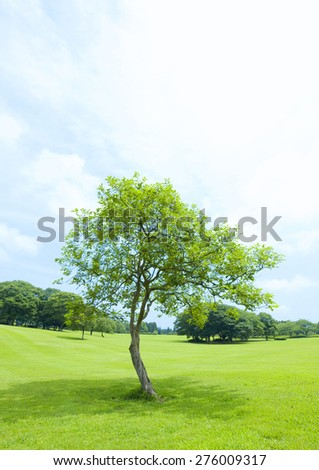 field, tree - stock photo