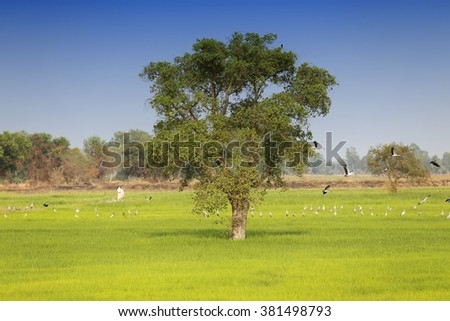 Field,tree and blue sky - stock photo