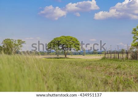 Field,tree and blue sky.  - stock photo