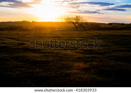 Field, tree and blue sky. Summer or spring landscape.  - stock photo