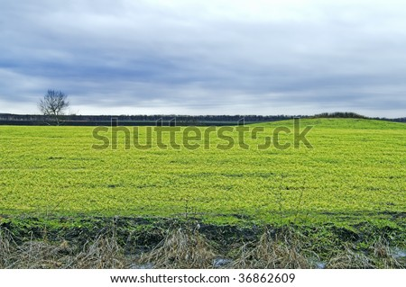 Field, tree, and hill at evening, with overcast skies. - stock photo