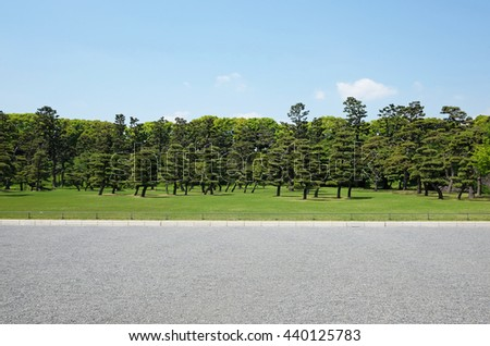 Field trees and blue sky - stock photo