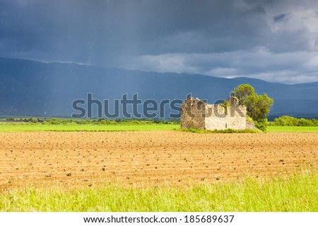 field with a ruin of house and tree, Plateau de Valensole, Provence, France - stock photo