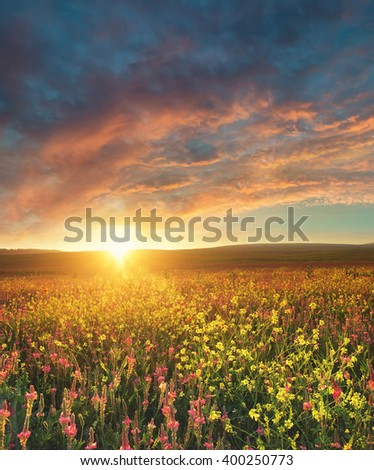 Field with flowers during sundown. Beautiful summer landscape - stock photo