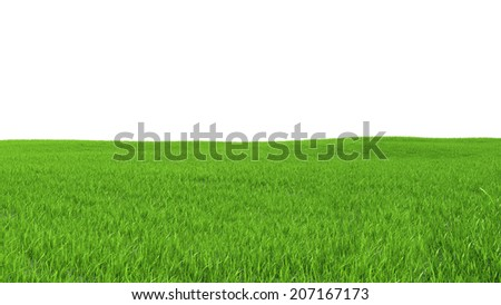 Field with green grass on a white background - stock photo
