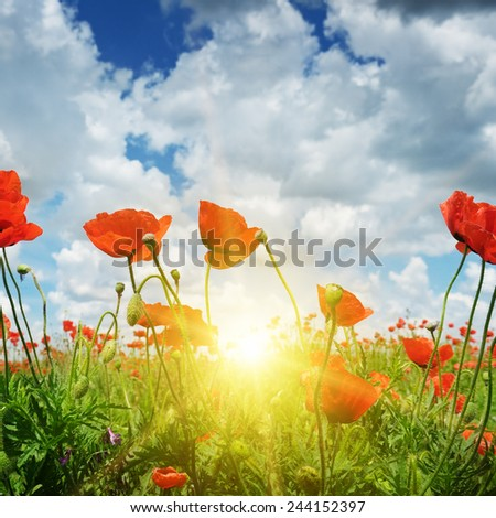 field with poppies and sun on blue sky - stock photo