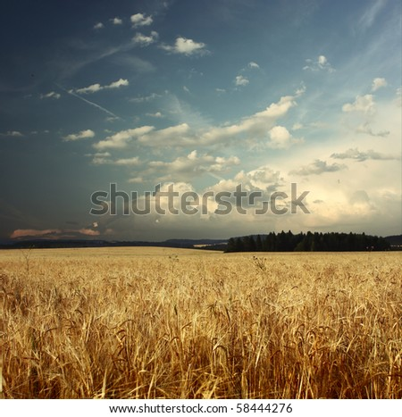 Field with ripe wheat and blue sky with clouds - stock photo