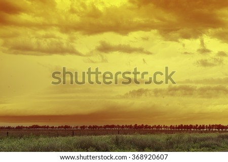 field with vegetation, surrounding trees and yellow sky with clouds - stock photo