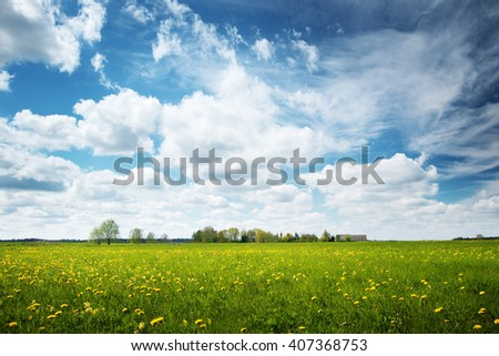 Field with yellow dandelions and blue sky - stock photo