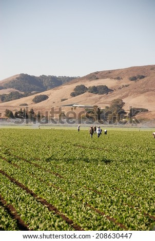 Field workers walk through rows of spinach. The future of fields like this are in question due to a devastating drought which has changed the landscape of rural California, making farmers nervous. - stock photo